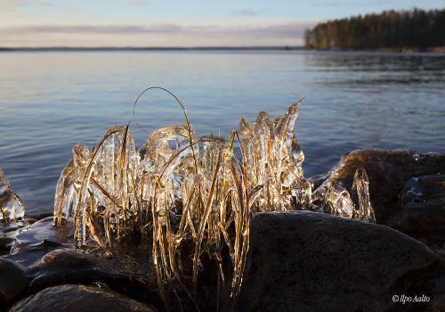Jäätyvä vesi on tavoittanut rannan heinät