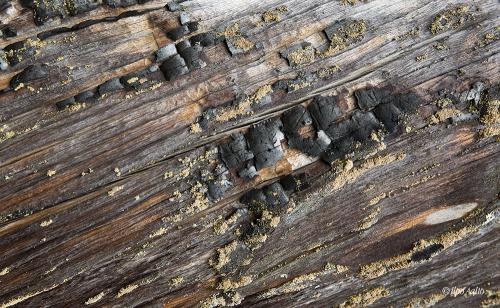 Kelon pintaa metsäpalon jäljiltä