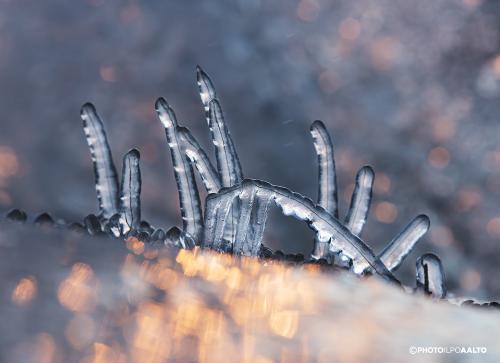 Jäätyneiden heinien taustalla tyrskyää