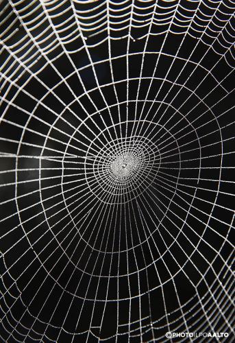 Hämähäkin seittiä aamukasteessa
