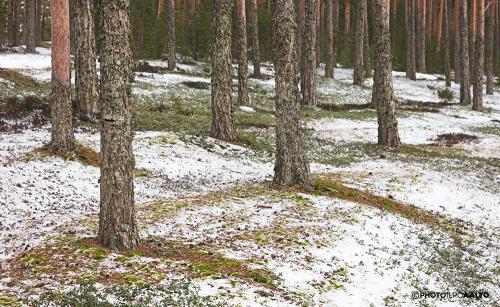 Ensilumen tuiskujälkiä metsässä