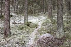 Ensilunta metsässä